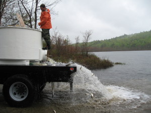 Alewives  dumping